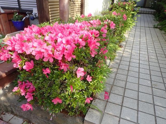 f:id:mochikichi-blog:20200612215015j:plain