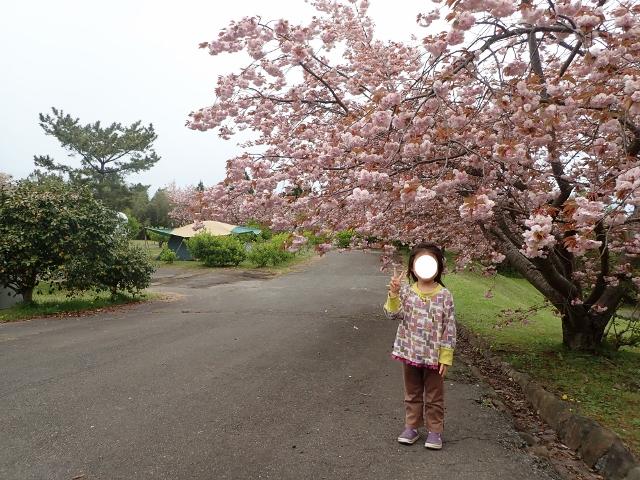f:id:mochikichi-blog:20200613145106j:plain