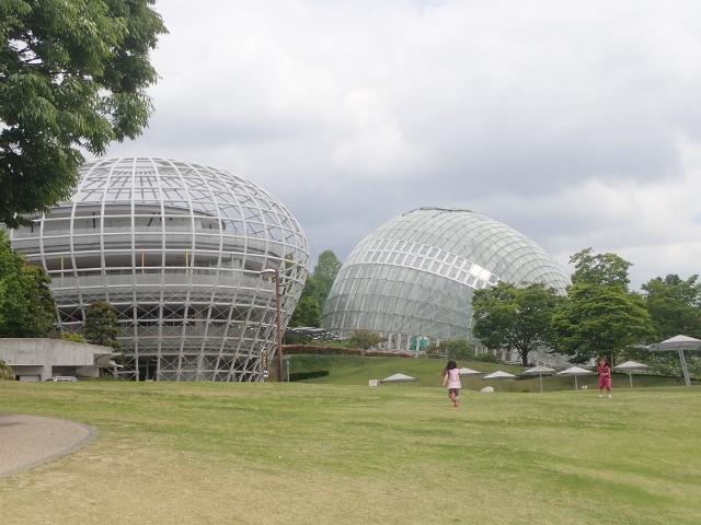 f:id:mochikichi-blog:20200613170735j:plain
