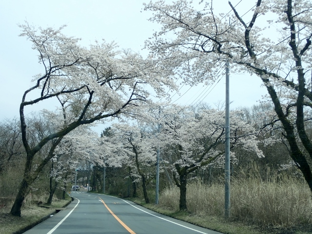 f:id:mochikichi-blog:20200613175438j:plain