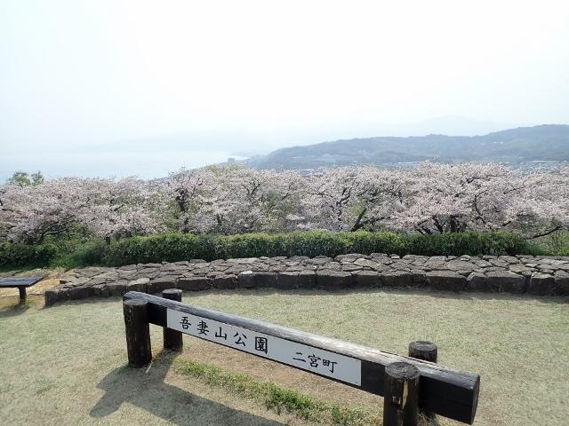f:id:mochikichi-blog:20200613181306j:plain