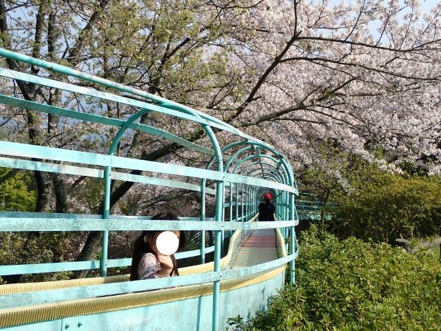 f:id:mochikichi-blog:20200613181326j:plain