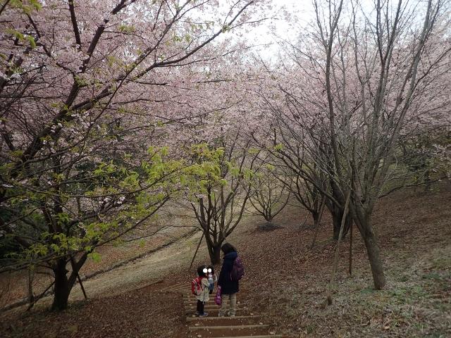 f:id:mochikichi-blog:20200625093144j:plain