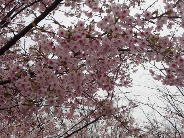 f:id:mochikichi-blog:20200625093149j:plain