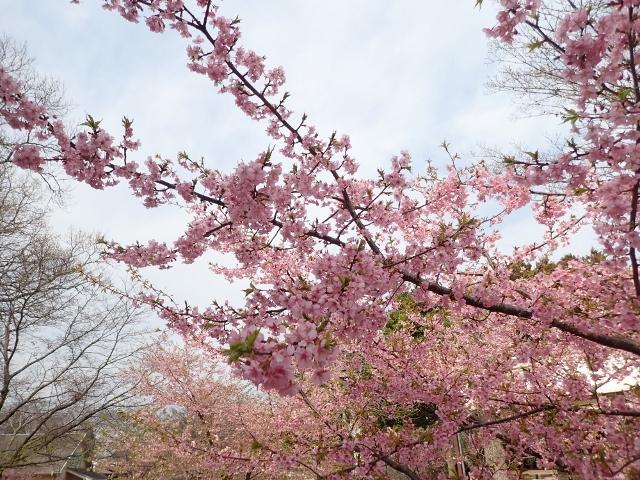 f:id:mochikichi-blog:20200625094257j:plain
