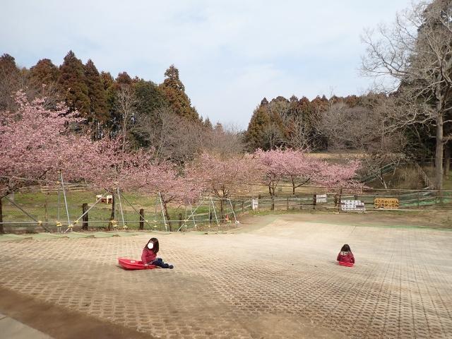 f:id:mochikichi-blog:20200625094306j:plain