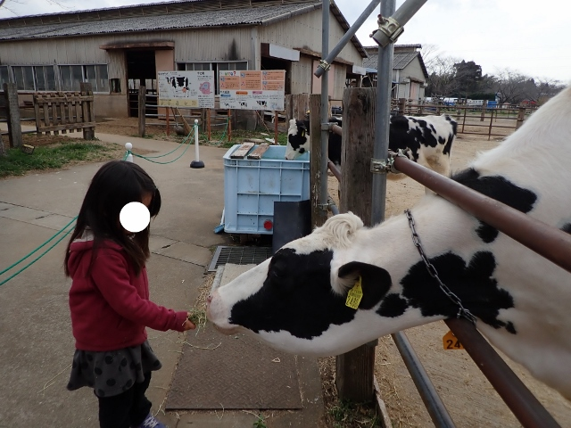 f:id:mochikichi-blog:20200625094335j:plain