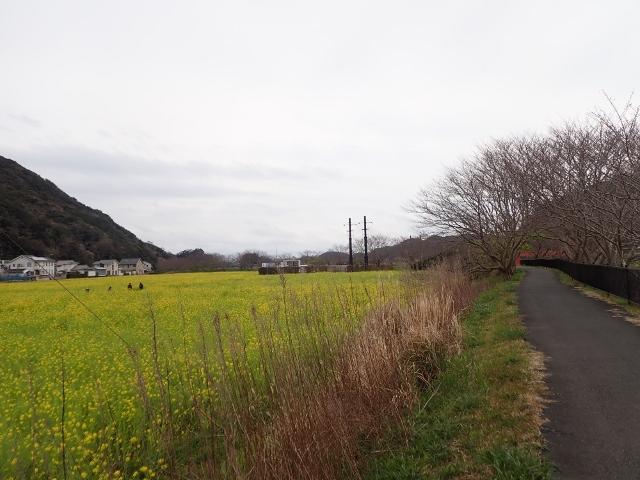 f:id:mochikichi-blog:20200625100419j:plain