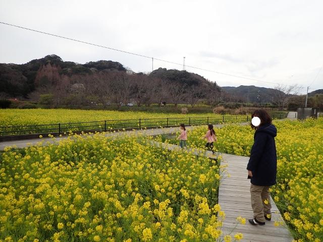 f:id:mochikichi-blog:20200625100424j:plain
