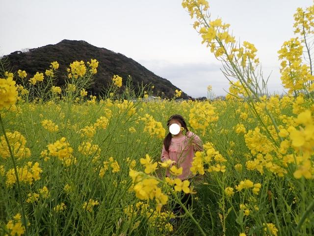 f:id:mochikichi-blog:20200625100430j:plain
