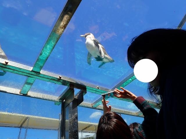 f:id:mochikichi-blog:20200625101709j:plain