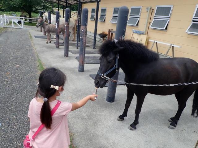 f:id:mochikichi-blog:20200628141443j:plain