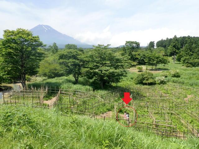 f:id:mochikichi-blog:20200628141558j:plain