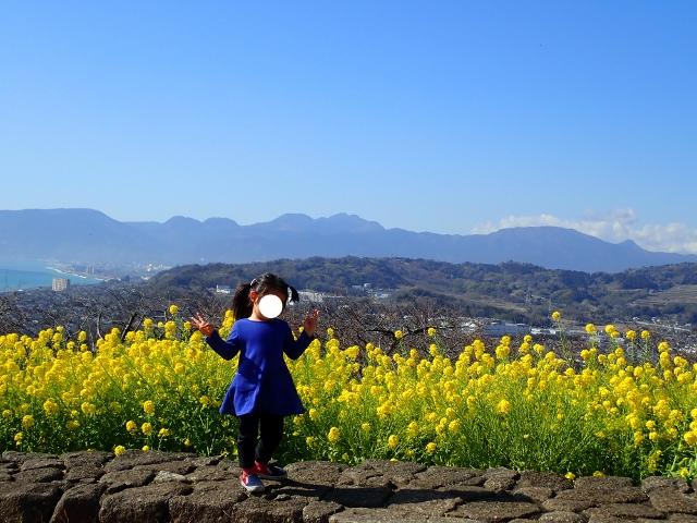 f:id:mochikichi-blog:20200701101633j:plain