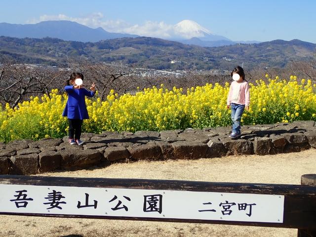 f:id:mochikichi-blog:20200701101641j:plain