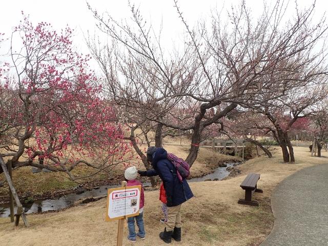 f:id:mochikichi-blog:20200701102934j:plain