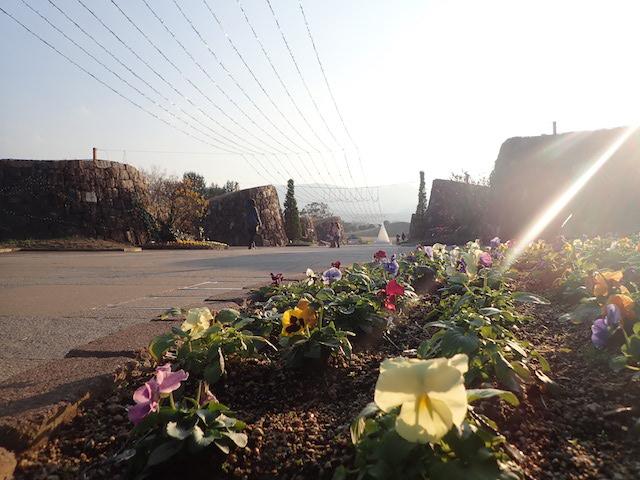 f:id:mochikichi-blog:20200725130610j:plain