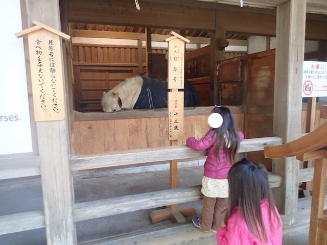 f:id:mochikichi-blog:20200725130812j:plain