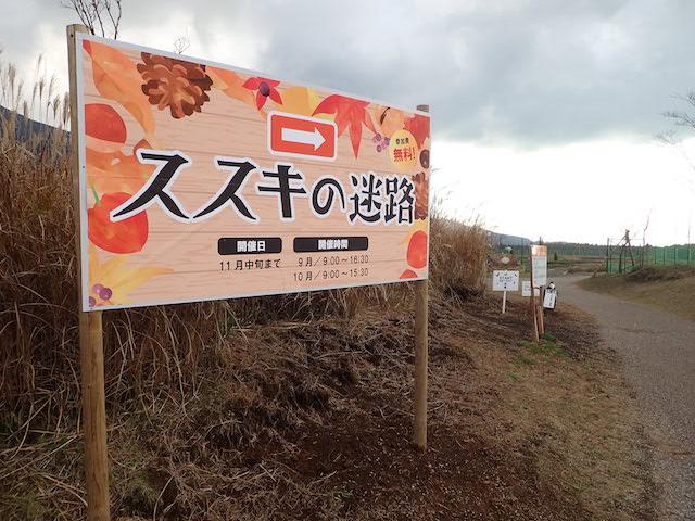 f:id:mochikichi-blog:20200727141451j:plain