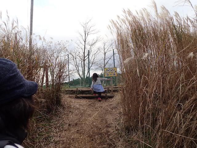 f:id:mochikichi-blog:20200727141506j:plain