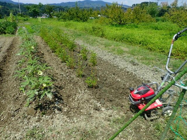 f:id:mochikichi-blog:20200805213547j:plain