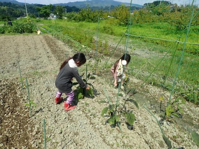 f:id:mochikichi-blog:20200805220113j:plain