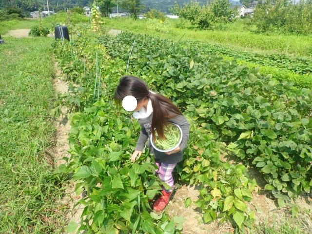 f:id:mochikichi-blog:20200805220123j:plain