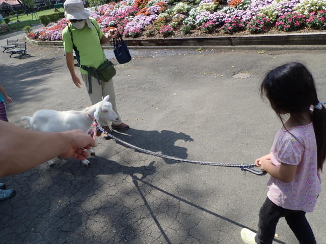 f:id:mochikichi-blog:20200831231715j:plain