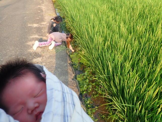 f:id:mochikichi-blog:20200901105337j:plain