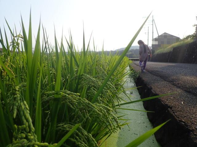 f:id:mochikichi-blog:20200901105349j:plain