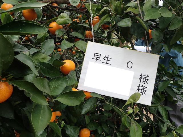 f:id:mochikichi-blog:20200903101947j:plain
