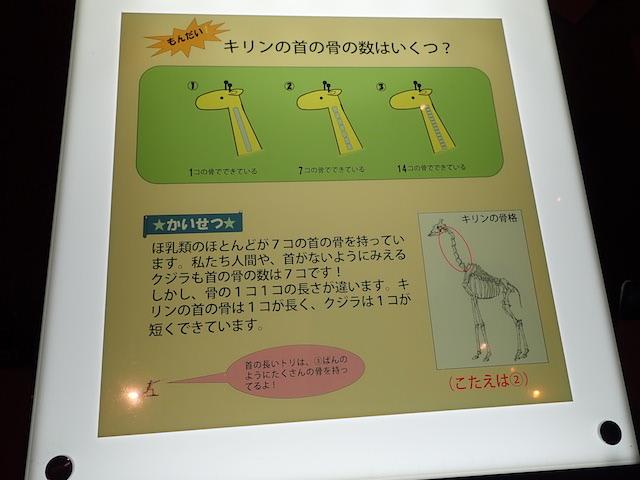 f:id:mochikichi-blog:20200903151944j:plain