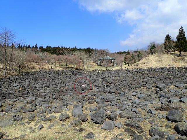 f:id:mochikichi-blog:20200903160704j:plain