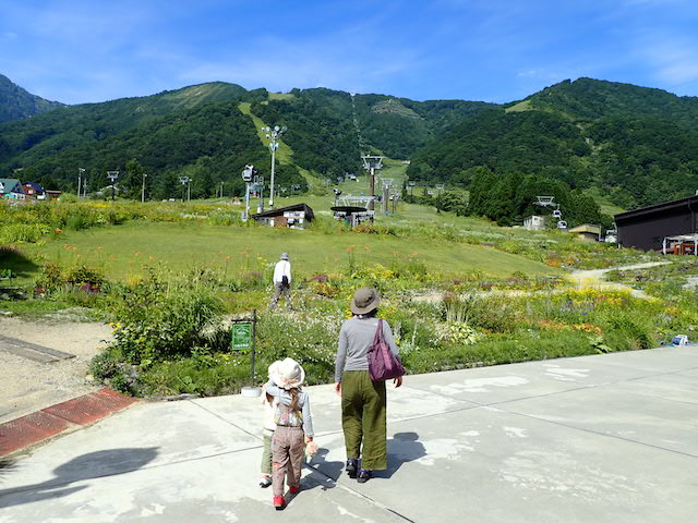 f:id:mochikichi-blog:20200904131420j:plain