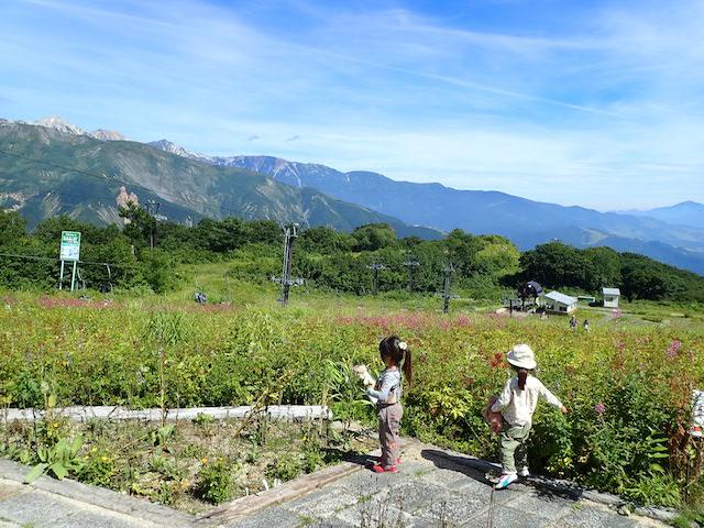 f:id:mochikichi-blog:20200904131511j:plain