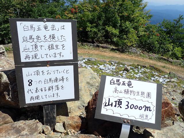 f:id:mochikichi-blog:20200904131755j:plain