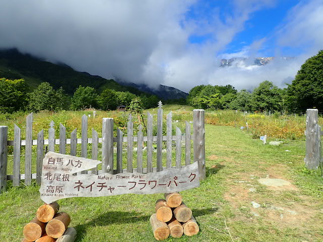 f:id:mochikichi-blog:20200904133934j:plain