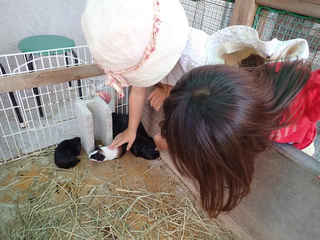 f:id:mochikichi-blog:20200904142641j:plain