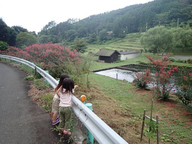 f:id:mochikichi-blog:20200904214541j:plain