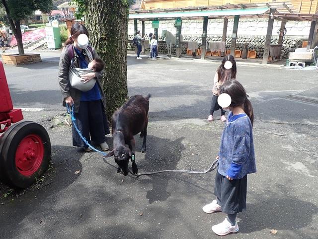 f:id:mochikichi-blog:20200929214818j:plain
