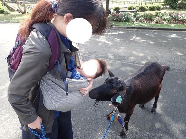 f:id:mochikichi-blog:20200929214831j:plain