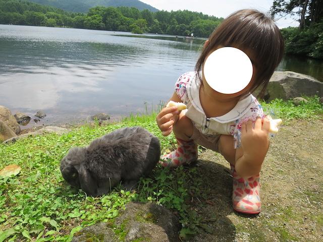 f:id:mochikichi-blog:20200929223150j:plain