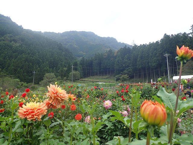 f:id:mochikichi-blog:20201009143633j:plain