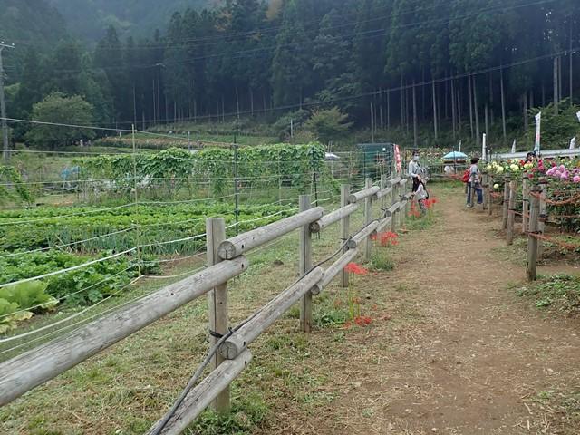 f:id:mochikichi-blog:20201009143716j:plain