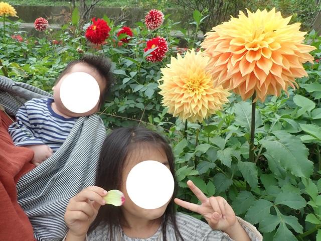 f:id:mochikichi-blog:20201009143723j:plain