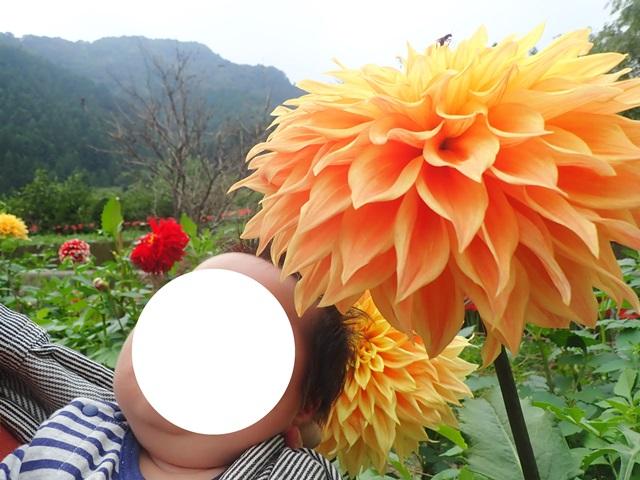 f:id:mochikichi-blog:20201009143727j:plain