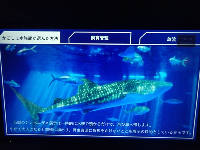 f:id:mochikichi-blog:20201230221000j:plain