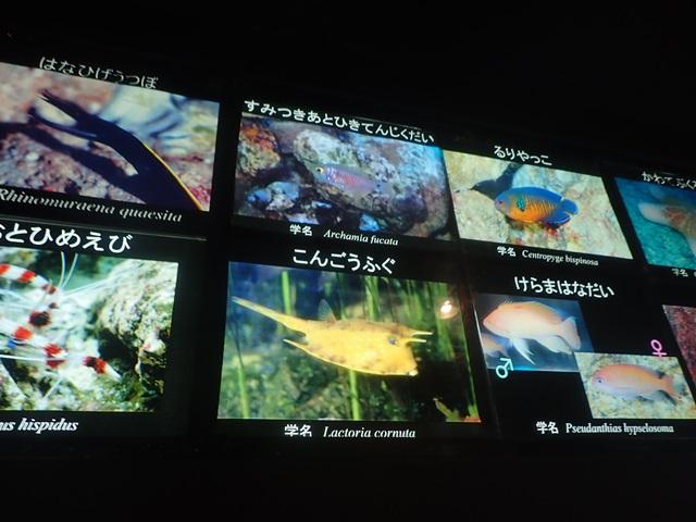 f:id:mochikichi-blog:20201230221052j:plain