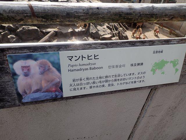 f:id:mochikichi-blog:20210103095137j:plain