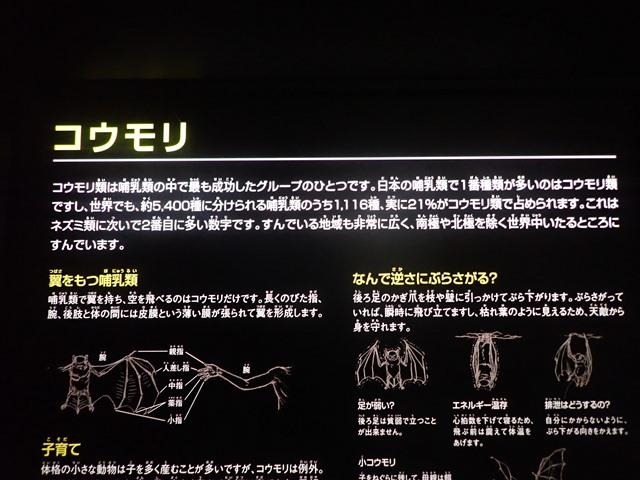 f:id:mochikichi-blog:20210103095248j:plain